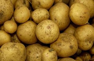 """Клубни картофеля """"Адретта"""""""